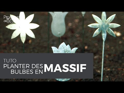 vid o sur les bulbes fleurs planter des bulbes en massif sans se fatiguer youtube. Black Bedroom Furniture Sets. Home Design Ideas
