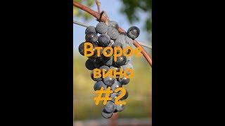 Второе вино из жмыха РЕЦЕПТ