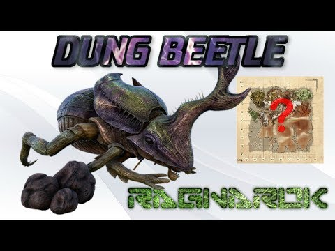 Ragnarok | Where to find Dung Beetles