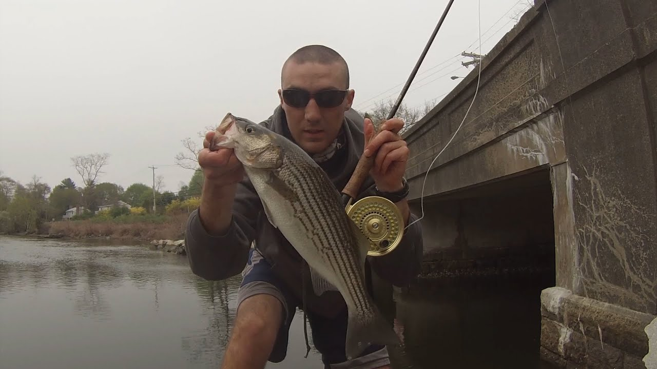 fly fishing for rhode island spring stripers youtube