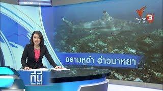 พบฝูงฉลามหูดำกว่า 50 ตัว ที่อ่าวมาหยา หลังปิดฟื้นฟู :  ที่นี่ Thai PBS (30 พ.ย. 61)
