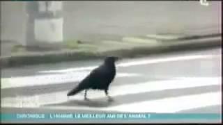الطائر-الذكي