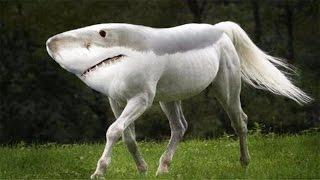 Топ САМЫЕ ОПАСНЫЕ животные в мире
