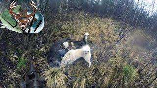 охота #12 кабан атакует