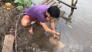 Đặt lợp cá bống dừa, cách bắt cá độc đáo nhất miền Tây!!!