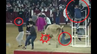 Top 5 funny, crazy animal compilations the best crazy animal videos, bulls, dogs, cats, chickens