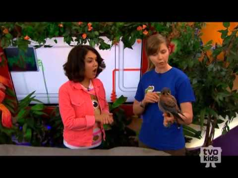 Maverick the Kestrel Visits TVOKids