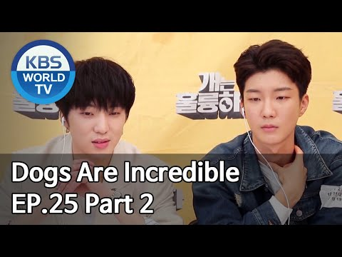 Dogs are incredible | 개는 훌륭하다 EP.25 Part 2 [SUB : ENG/2020.05.13]