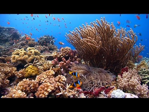 """Reefscapes: Nature's Aquarium"" ambient underwater relaxing natural coral reefs & ocean nature HD"