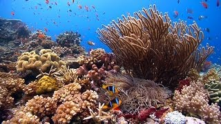 """""""Reefscapes: Nature's Aquarium"""" ambient underwater relaxing natural coral reefs & ocean nature HD"""