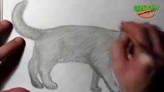 Как нарисовать кошку карандашом на бумаге.How to draw a cat pencil on paper