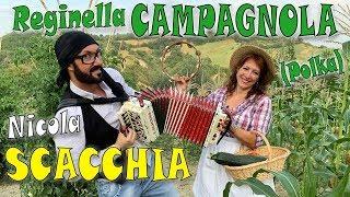 Download REGINELLA CAMPAGNOLA (polka) elab. NICOLA SCACCHIA e la TECNICA TRADIZIONALE DELL'ORGANETTO dubbotte