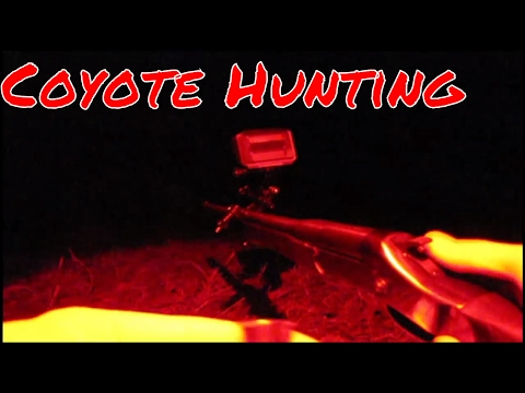 Coyote Hunting At Night For The FIRST Time!