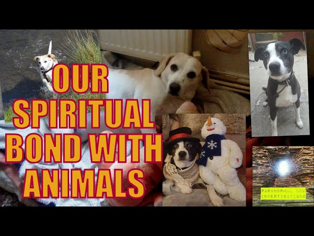 Our Spiritual connection with dogs, what our pets teach us about life.