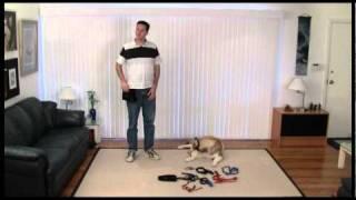 Basic Dog Training Skills - Using Equipment - 01 Introduction