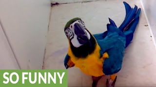 Macaw goes bonkers for shower playtime
