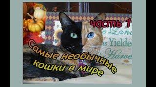 Самые необычные кошки в мире, кошки - звёзды интернета