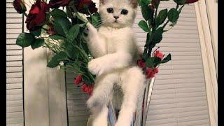 Смешное Видео с Кошками! Веселые Котейки 2015!(Смешное Видео с Кошками! Веселые Котейки 2015! кошки 2015, кошки боятся воды, кошк..., 2015-04-21T19:54:51.000Z)