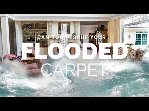 How To Rescue Your Flooded Carpet