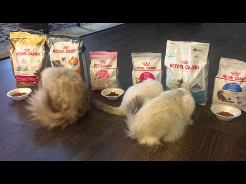What Kind Of Food  (Royal Canin) Will Cat's Like?