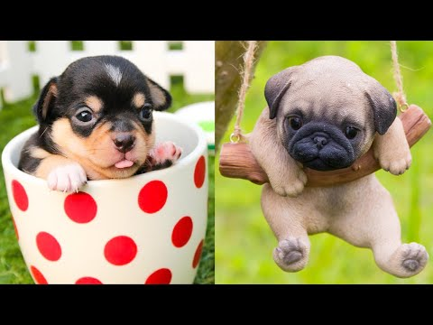 Baby Dogs - Cute and Funny Dog Videos Compilation #21 | Aww Animals