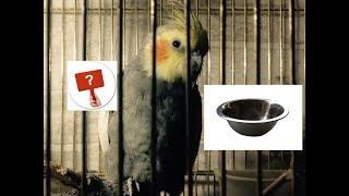 Зимой ваш попугай голодает, а вы и не догадываетесь.Линька. стресс. НГ украшение. АСМР тихий голос