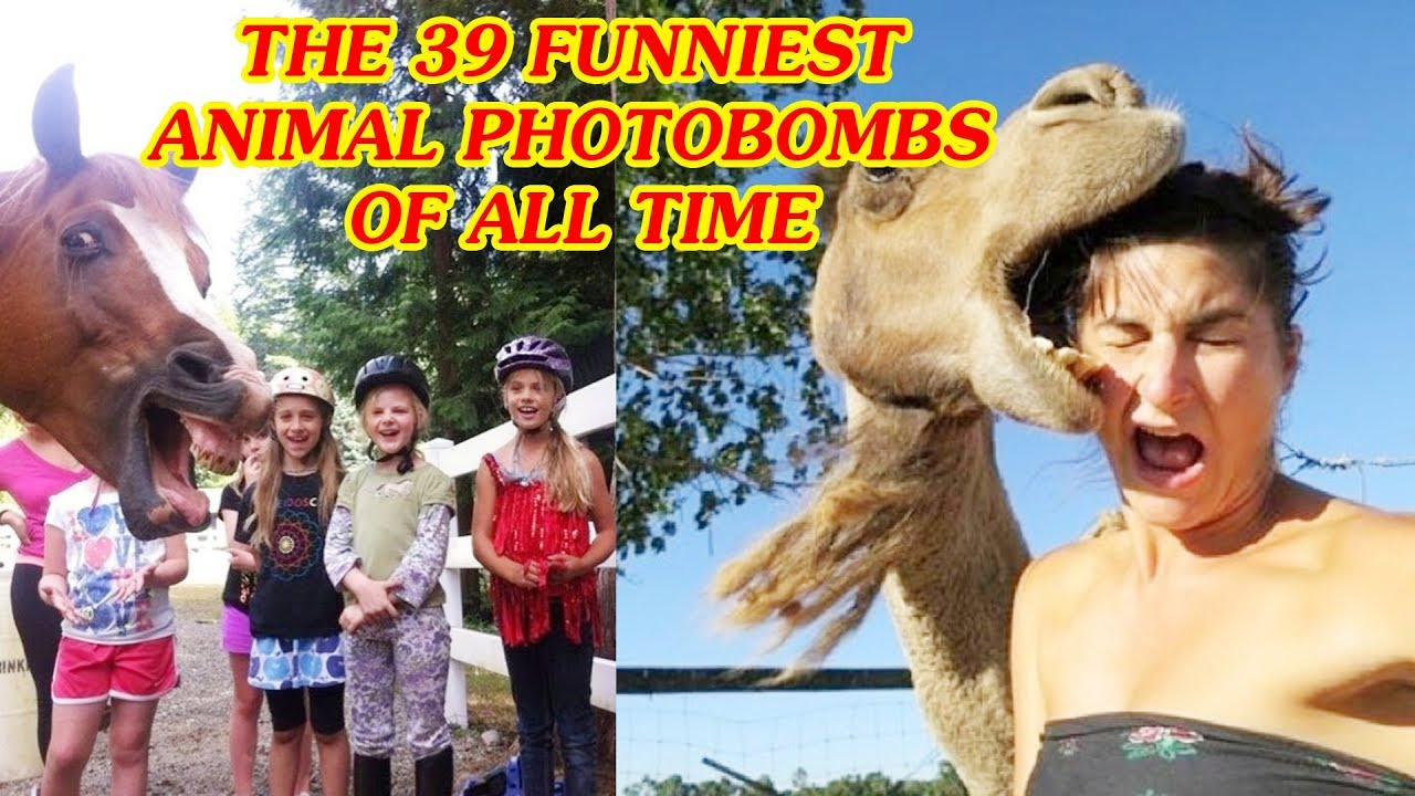 Top Interesing Life The Funniest Animal Photobombs Of All - The 39 funniest animal photobombs of all time
