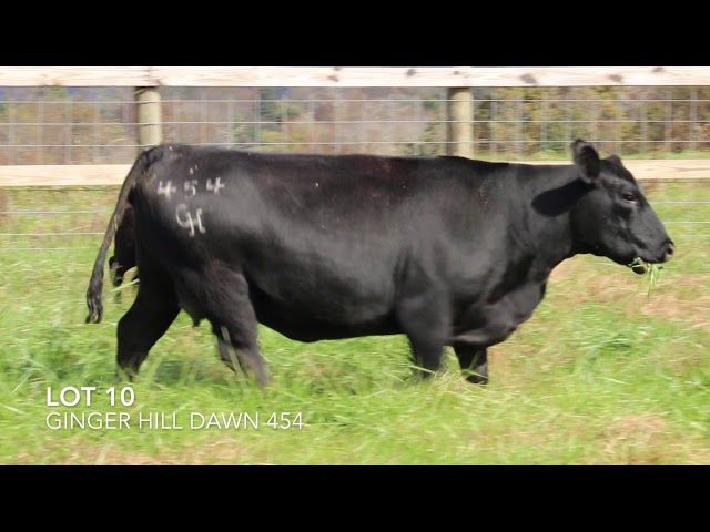 Ginger Hill Angus Lot 10