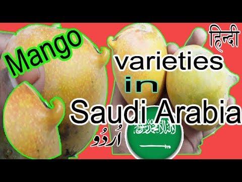 Mangoes varieties in saudi arab|best mangoes varieties
