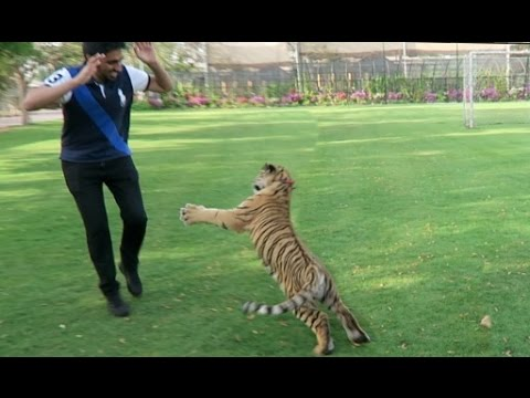 ATTACKED BY A TIGER !!!
