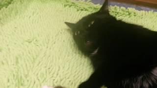 Ну очень добрая кошка♥♡