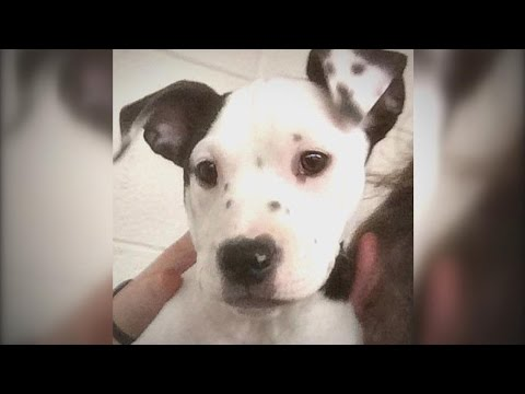 Puppy Born With Its Own Image On Ear Finds Forever Home