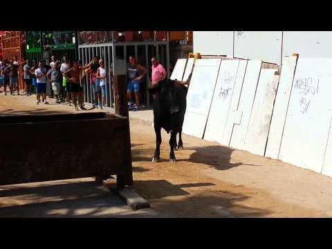 29 августа 2015г Беникарло игры с быками