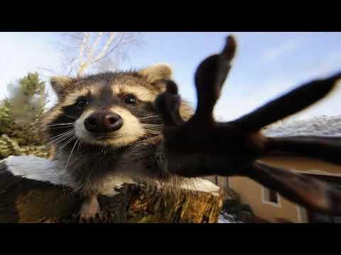 Waschbären Besuch - Видео онлайн