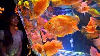 Инсталляция из аквариумов и золотых рыбок удивляет жителей Токио (новости)