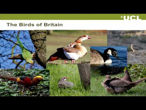 Following birds along the pathway to invasion - UCL Lunch Hour Lecture