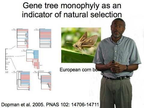 Scott Edwards (Harvard) Part 1: Gene trees and phylogeograph