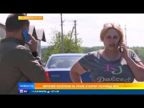 Некуда бежать: жителей поселков на Урале приводят в ужас полчища навозных мух