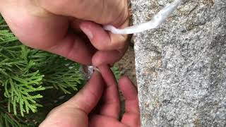 Come prepararsi per l'inverno albero thuja occidentalis smaragd albero