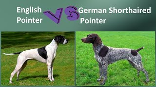 English Pointer VS German Shorthaired Pointer  Breed Comparison