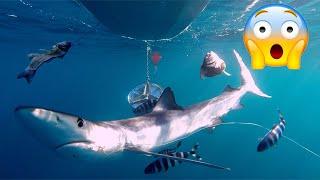 7 Tiburones Más Audaces Del Mediterráneo