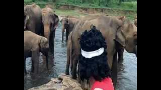 g�n�rique Sri Lanka.wmv