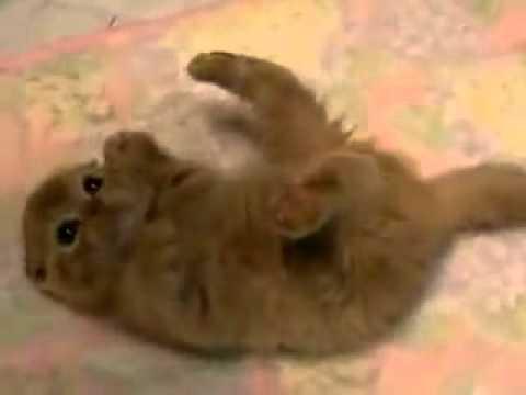Mèo con dễ thương quá