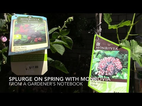 Splurge on Spring with Monrovia - Planting Today -- from A Gardener's Notebook