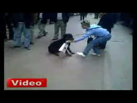 Cat Attacks Rottweiler