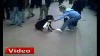 Cat Attacks Rottweiler