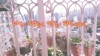😍명품 다육이 만들기👍패트병으로 만든 화분 어떻게 걸어 놓나요 참 쉽죠😘 못난이 다육이 이렇게 걸어 두며는 공주로 변신 多肉植物 Succulent plant 다육식물