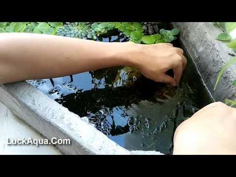 Clean up My Cement Styrofoam Guppy Fish Tank [TRIANGLE]