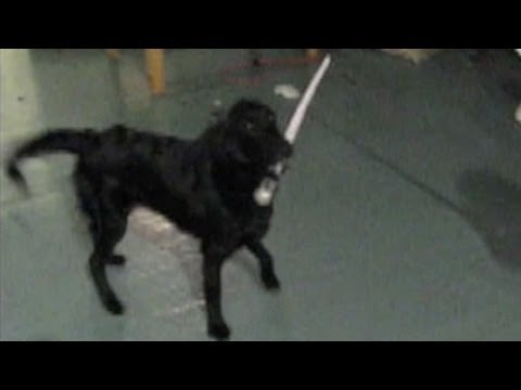 Swordfighting Dog
