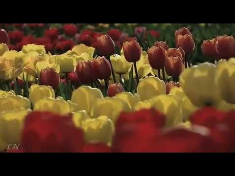 Изображение предпросмотра прочтения – ДианаГаджиева читает произведение «Весна (Зима недаром злится)» Ф.И.Тютчева